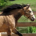 elk-konie-ośrodek-jaździecki-hadrian